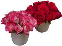 arranjos-mini-rosas
