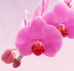 Orquidea Presente