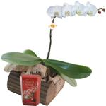 Presente Homem - Orquídea branca com chocolate importado