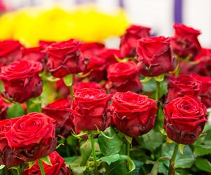 Significados das rosas - de 1 a 100
