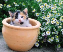 Plantas toxicas gatos caes