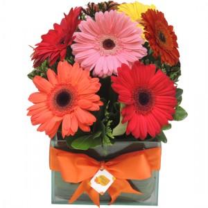 Flores & Cores | Gerberas