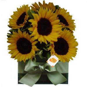 Flores & Cores Girassol