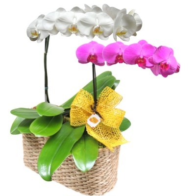 Orquidea branca e roxa no cesto de palha