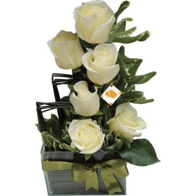 Enviando Paz | Rosas Brancas