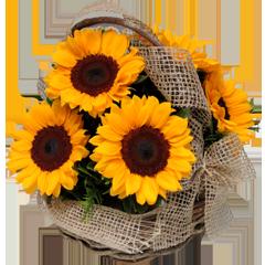 Cesta com flores Girassol