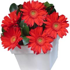 flores ,presentes ,arranjos